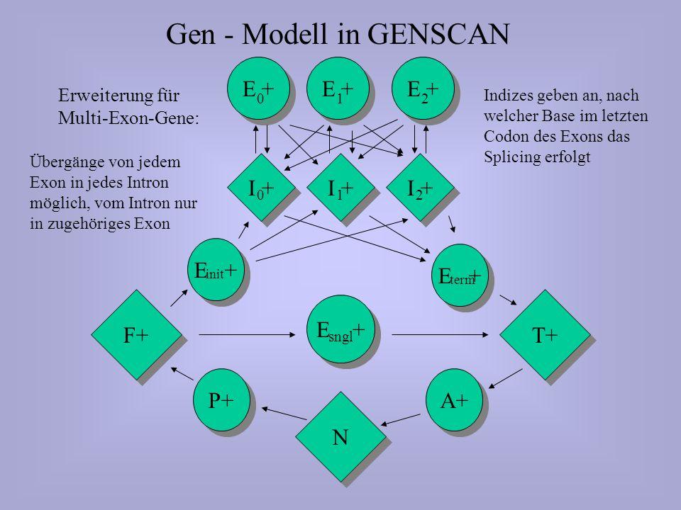 N N P+ F+ E + sngl T+ A+ Gen - Modell in GENSCAN E + 210 I + 210 E + init E + term Erweiterung für Multi-Exon-Gene: Indizes geben an, nach welcher Base im letzten Codon des Exons das Splicing erfolgt Übergänge von jedem Exon in jedes Intron möglich, vom Intron nur in zugehöriges Exon