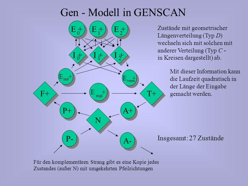 Gen - Modell in GENSCAN N N P+ F+ E + sngl T+ A+ E + 210 I + 210 E + init E + term P- A- Für den komplementären Strang gibt es eine Kopie jedes Zustandes (außer N) mit umgekehrten Pfeilrichtungen Zustände mit geometrischer Längenverteilung (Typ D) wechseln sich mit solchen mit anderer Verteilung (Typ C - in Kreisen dargestellt) ab.