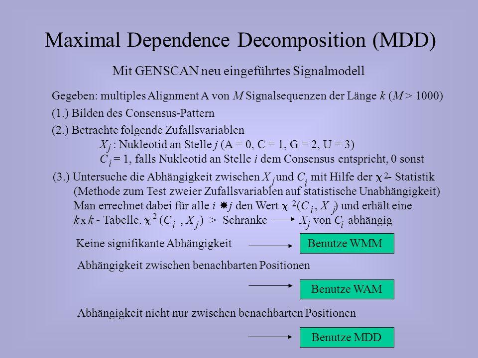 Maximal Dependence Decomposition (MDD) Mit GENSCAN neu eingeführtes Signalmodell Gegeben: multiples Alignment A von M Signalsequenzen der Länge k (M > 1000) (1.) Bilden des Consensus-Pattern (2.) Betrachte folgende Zufallsvariablen X : Nukleotid an Stelle j (A = 0, C = 1, G = 2, U = 3) C = 1, falls Nukleotid an Stelle i dem Consensus entspricht, 0 sonst j i Keine signifikante Abhängigkeit Benutze WMM Abhängigkeit zwischen benachbarten Positionen Benutze WAM Abhängigkeit nicht nur zwischen benachbarten Positionen Benutze MDD (3.) Untersuche die Abhängigkeit zwischen X und C mit Hilfe der - Statistik (Methode zum Test zweier Zufallsvariablen auf statistische Unabhängigkeit) Man errechnet dabei für alle i j den Wert (C, X ) und erhält eine k k - Tabelle.