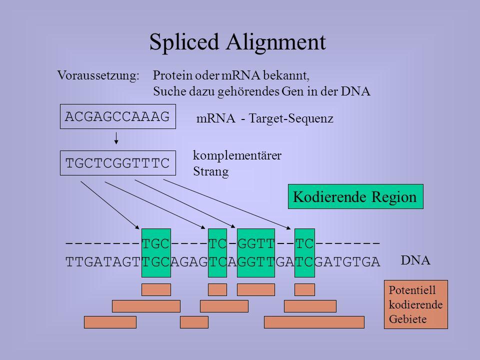 ------- TTGATAGTTGCAGAGTCAGGTTGATCGATGTGA DNA Spliced Alignment Voraussetzung: Protein oder mRNA bekannt, Suche dazu gehörendes Gen in der DNA ACGAGCCAAAG mRNA - Target-Sequenz TGCTCGGTTTC komplementärer Strang --------TGC ----TC -GGTT TC-- Kodierende Region Potentiell kodierende Gebiete