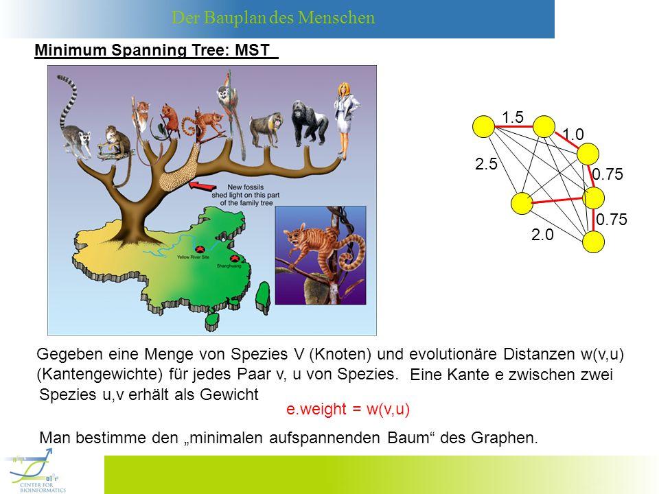 Der Bauplan des Menschen Da log(m) log(n 2 ) = 2 log(n) O(log(n)) ist, folgt weiter Da der Graph nur dann einen aufspannenden Baum besitzt, wenn die Zahl der Kanten m größer gleich n-1 ist, können wir die obige Laufzeit noch vereinfachen: O( m log n + n log n) O( m log n) Satz [12]: Der Algorithmus von Kruskal zur Berechnung des MSTs eines Graphen G=(V,E) mit n Knoten und m n Kanten hat Laufzeit O(m log n).