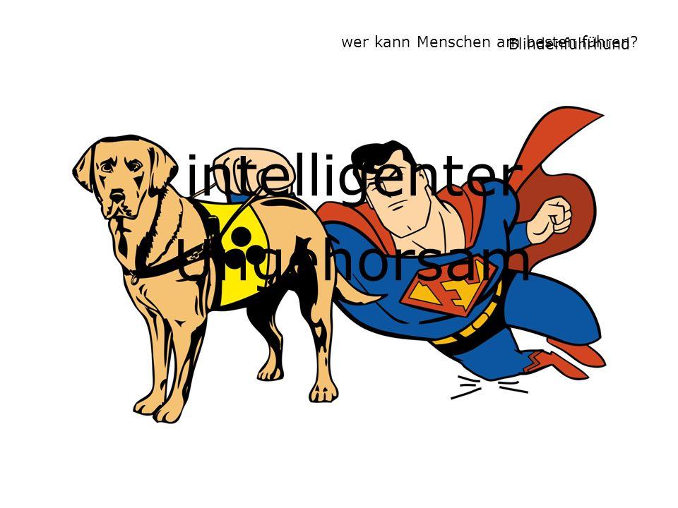 Blindenführhund intelligenter Ungehorsam wer kann Menschen am besten führen?
