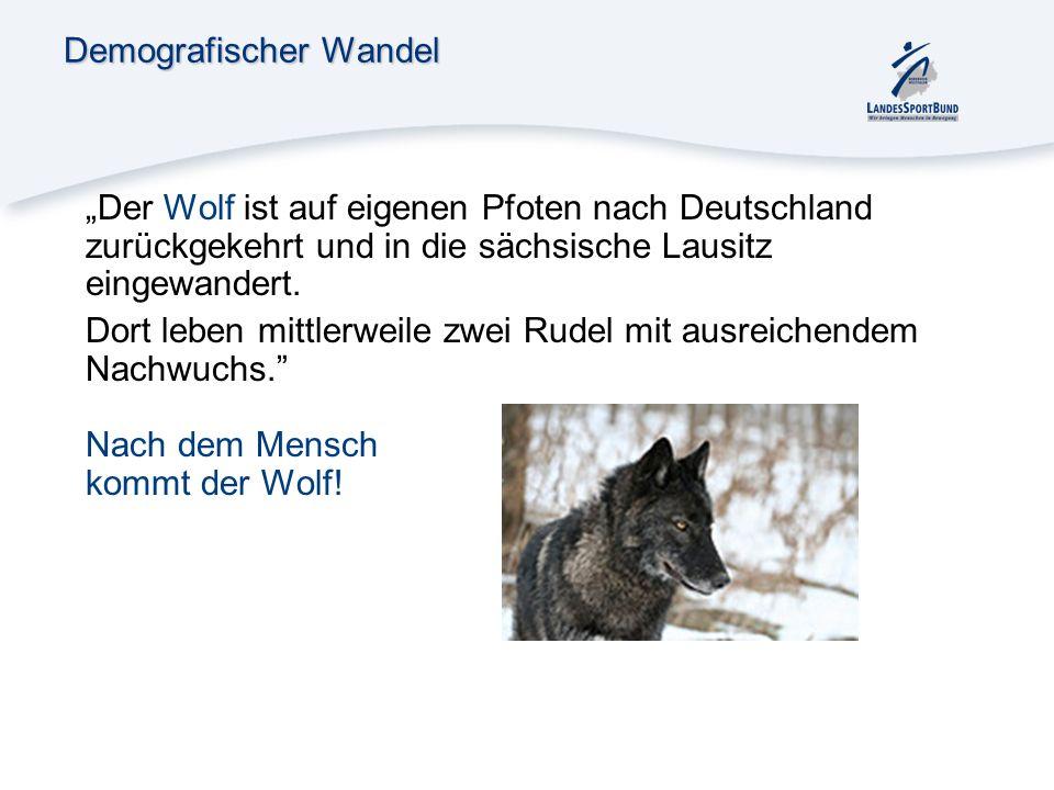 Demografischer Wandel Der Wolf ist auf eigenen Pfoten nach Deutschland zurückgekehrt und in die sächsische Lausitz eingewandert. Dort leben mittlerwei
