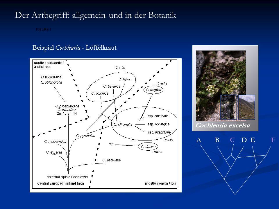 Der Artbegriff: allgemein und in der Botanik Beispiel Cochlearia - Löffelkraut A B C D E F Cochlearia excelsa