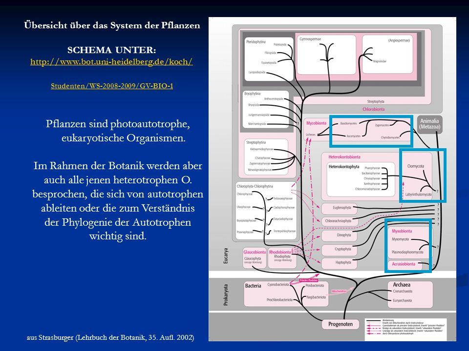 Übersicht über das System der Pflanzen SCHEMA UNTER: http://www.bot.uni-heidelberg.de/koch/ Studenten/WS-2008-2009/Studenten/WS-2008-2009/GV-BIO-1 aus