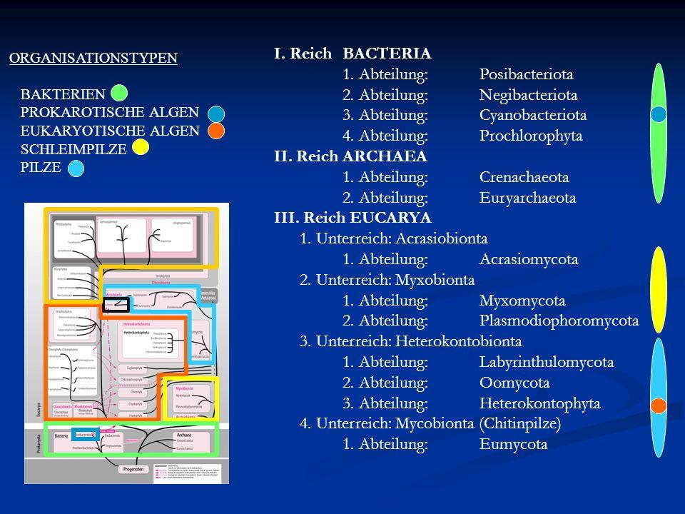 I. ReichBACTERIA 1. Abteilung: Posibacteriota 2. Abteilung:Negibacteriota 3. Abteilung:Cyanobacteriota 4. Abteilung:Prochlorophyta II. Reich ARCHAEA 1