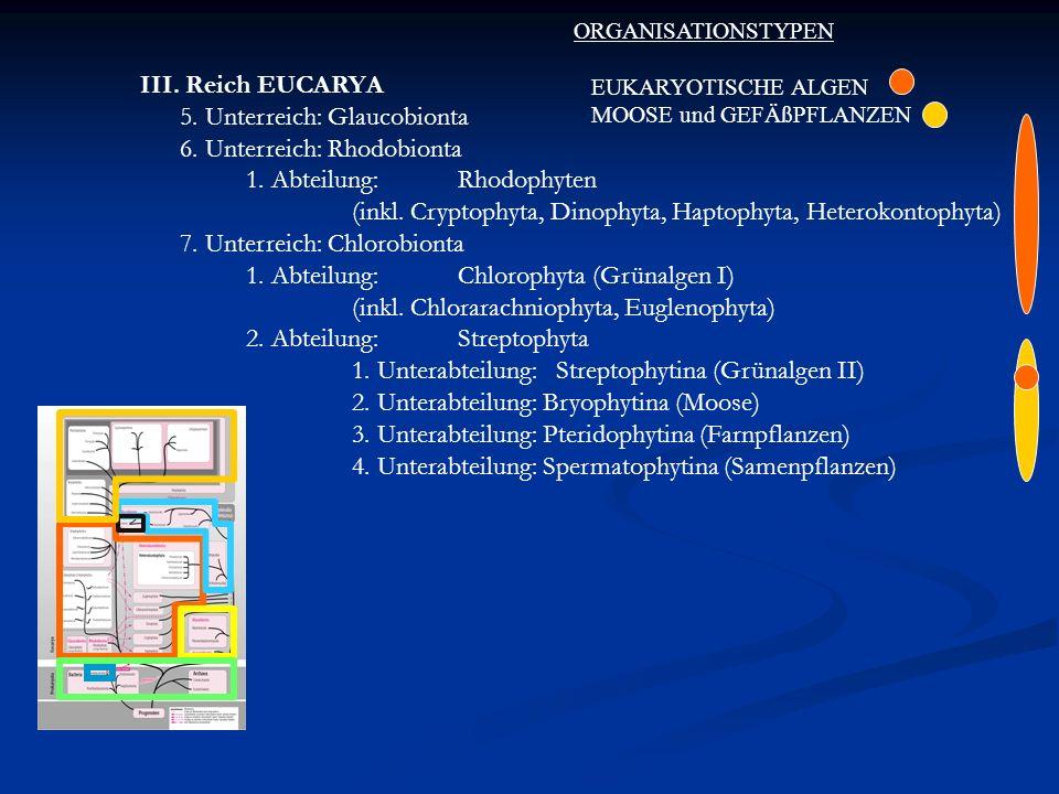 III. Reich EUCARYA 5. Unterreich: Glaucobionta 6. Unterreich: Rhodobionta 1. Abteilung:Rhodophyten (inkl. Cryptophyta, Dinophyta, Haptophyta, Heteroko