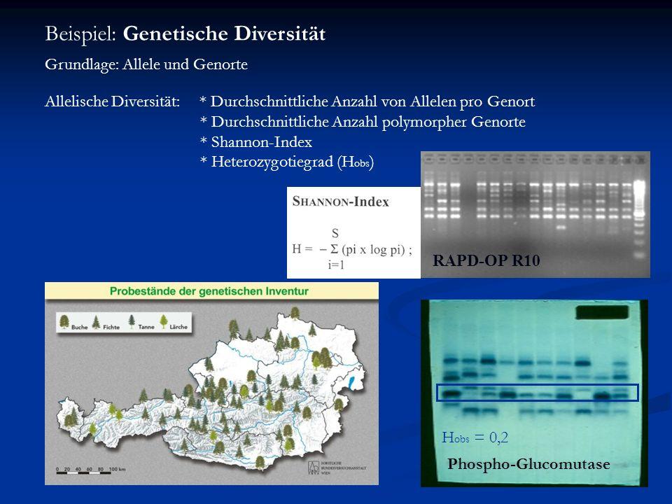Beispiel: Genetische Diversität Grundlage: Allele und Genorte Allelische Diversität: * Durchschnittliche Anzahl von Allelen pro Genort * Durchschnittl