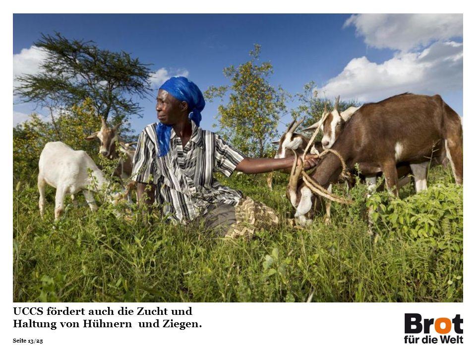 Seite 13/25 UCCS fördert auch die Zucht und Haltung von Hühnern und Ziegen.