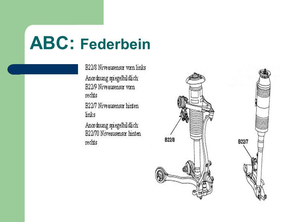ABC: Federbein