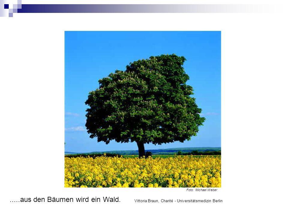 Michael Weber Foto: Michael Weber.....aus den Bäumen wird ein Wald.