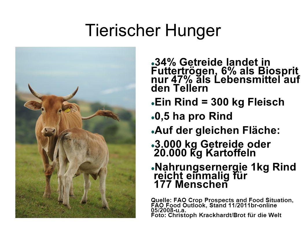 Tierischer Hunger 34% Getreide landet in Futtertrögen, 6% als Biosprit nur 47% als Lebensmittel auf den Tellern Ein Rind = 300 kg Fleisch 0,5 ha pro R