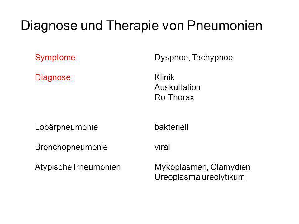 Diagnose und Therapie von Pneumonien Symptome: Dyspnoe, Tachypnoe Diagnose:Klinik Auskultation Rö-Thorax Lobärpneumoniebakteriell Bronchopneumonievira