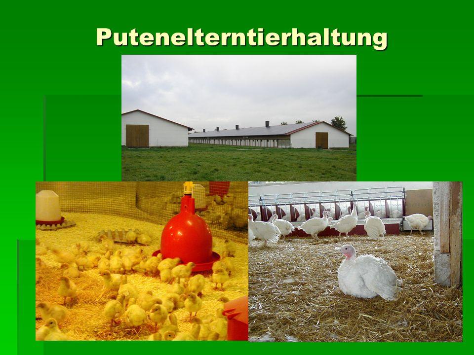 Der lange Weg zur Baugenehmigung 2000 Dromersheim 2000 Dromersheim 2001 Birklar 2001 Birklar Geplant ist die Erweiterung der Putenelterntierhaltung in einem Betrieb mit 5.000 Zuchtputen.