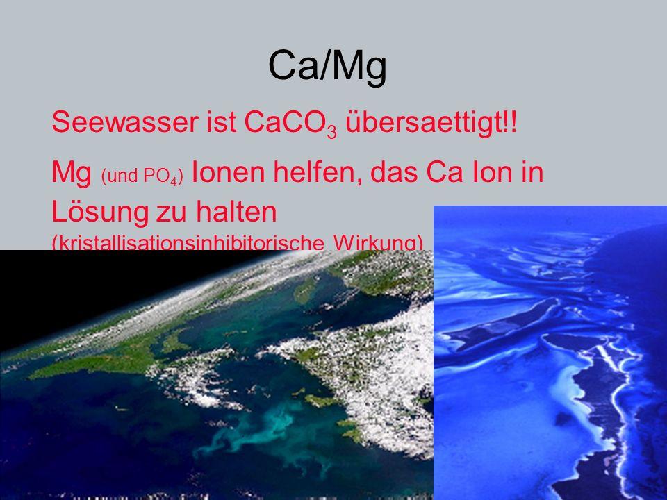 Ca/Mg Seewasser ist CaCO 3 übersaettigt!! Mg (und PO 4 ) Ionen helfen, das Ca Ion in Lösung zu halten (kristallisationsinhibitorische Wirkung)