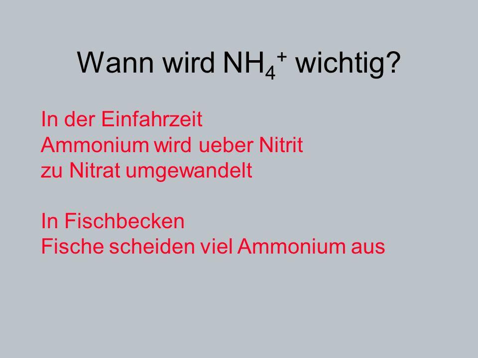 Wann wird NH 4 + wichtig? In der Einfahrzeit Ammonium wird ueber Nitrit zu Nitrat umgewandelt In Fischbecken Fische scheiden viel Ammonium aus