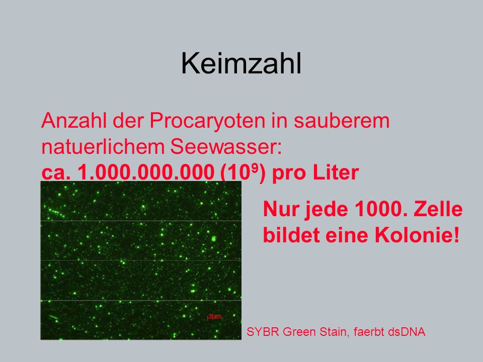 Keimzahl Anzahl der Procaryoten in sauberem natuerlichem Seewasser: ca. 1.000.000.000 (10 9 ) pro Liter Nur jede 1000. Zelle bildet eine Kolonie! SYBR