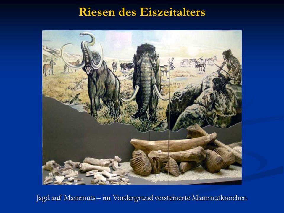Riesen des Eiszeitalters Jagd auf Mammuts – im Vordergrund versteinerte Mammutknochen