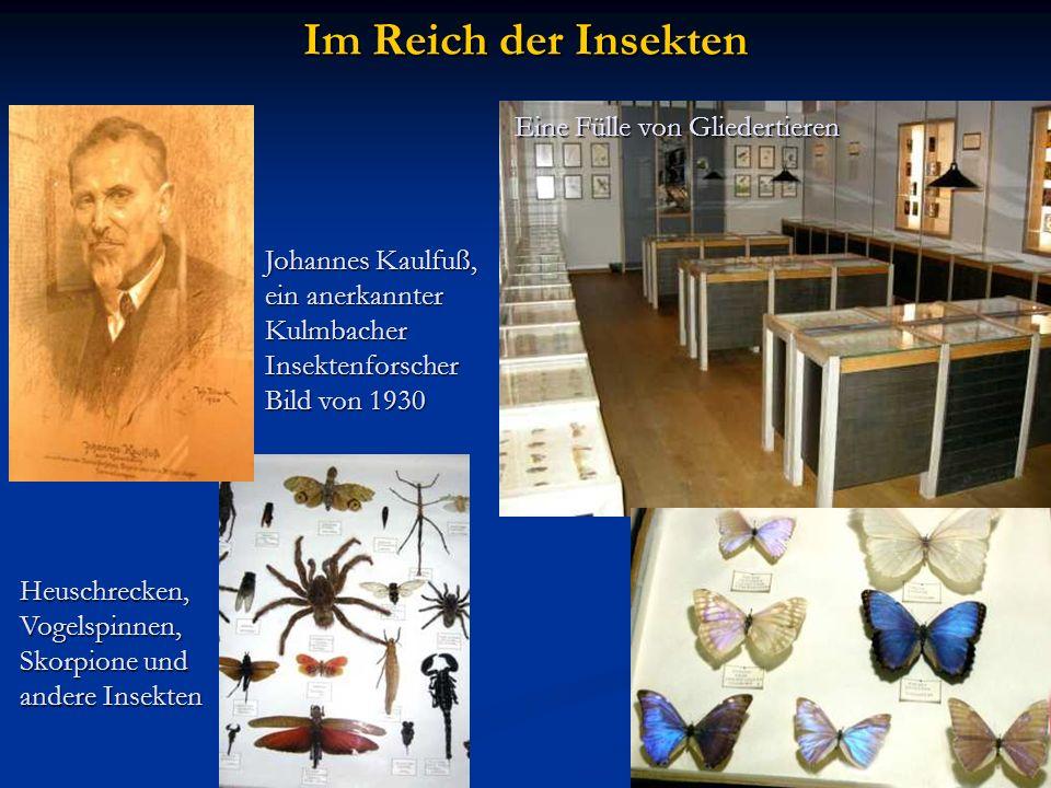 Im Reich der Insekten Eine Fülle von Gliedertieren Johannes Kaulfuß, ein anerkannter KulmbacherInsektenforscher Bild von 1930 Heuschrecken,Vogelspinne