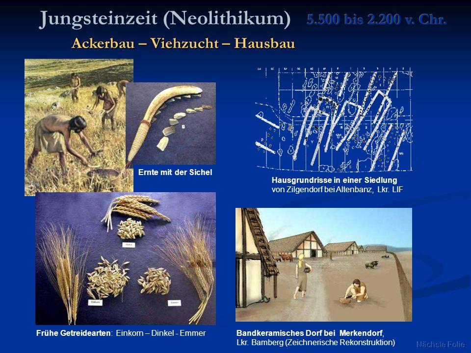 Jungsteinzeit (Neolithikum) Ernte mit der Sichel Hausgrundrisse in einer Siedlung von Zilgendorf bei Altenbanz, Lkr. LIF Bandkeramisches Dorf bei Merk