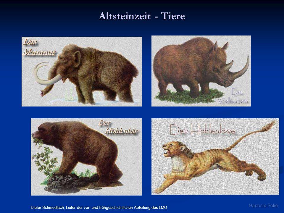 Altsteinzeit - Tiere Dieter Schmudlach, Leiter der vor- und frühgeschichtlichen Abteilung des LMO