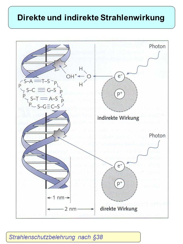 Wechselwirkung ionisierender Strahlung mit biologischen Strukturen Indirekter EffektDirekter Effekt Physikalische Phase (10 -16 s) Energeiabsorption I