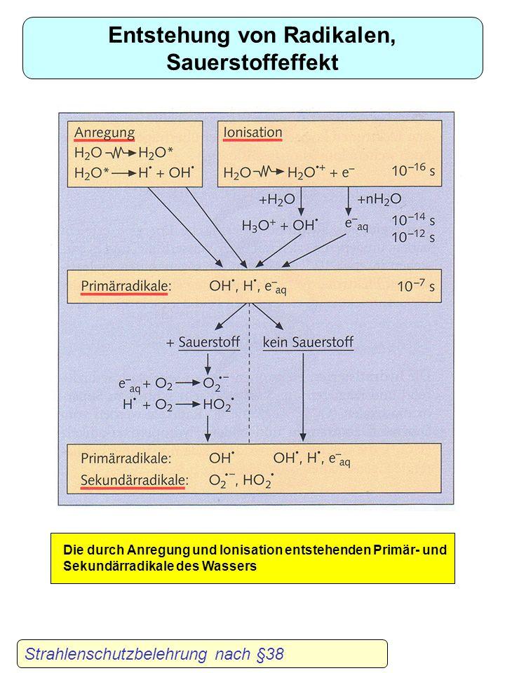Direkte und indirekte Strahlenwirkung Strahlenschutzbelehrung nach §38