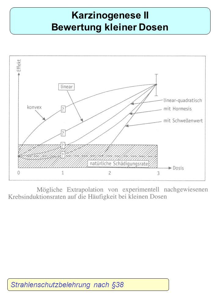 Beispiele für deterministische Strahlenschäden Strahlenschutzbelehrung nach §38 Hautverbrennung nach Tumorbestrahlung Linsentrübung durch ionisierende