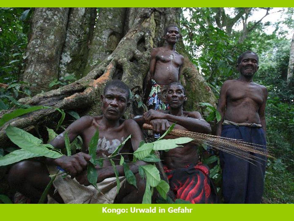 Kongo: Urwald in Gefahr