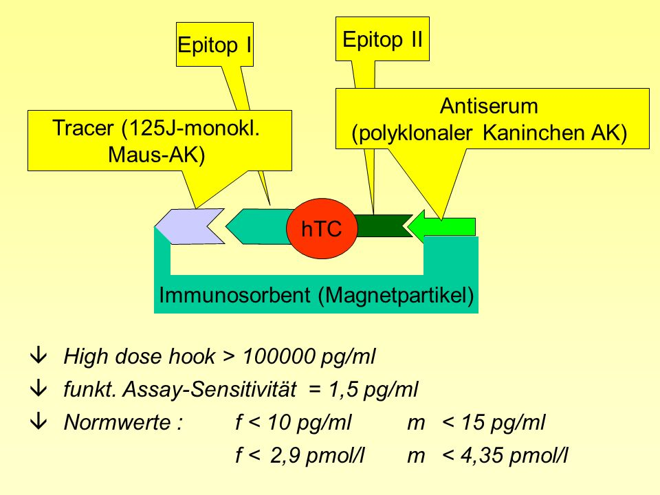 Calcitonin âErhöht bei C-Zell-Proliferation (CCH, MTC) âparaneoplastische Erhöhung bei BC, seltener Mamma-Ca, Magen-Ca âverlängerte HWZ bei Niereninsuffizienz, Leberinsuffizienz âerhöhte Werte unter Protonenpumpeninhibitoren âerhöhte basale und stimulierte Calcitonin-Spiegel bei Pseudohypoparathyreoidismus