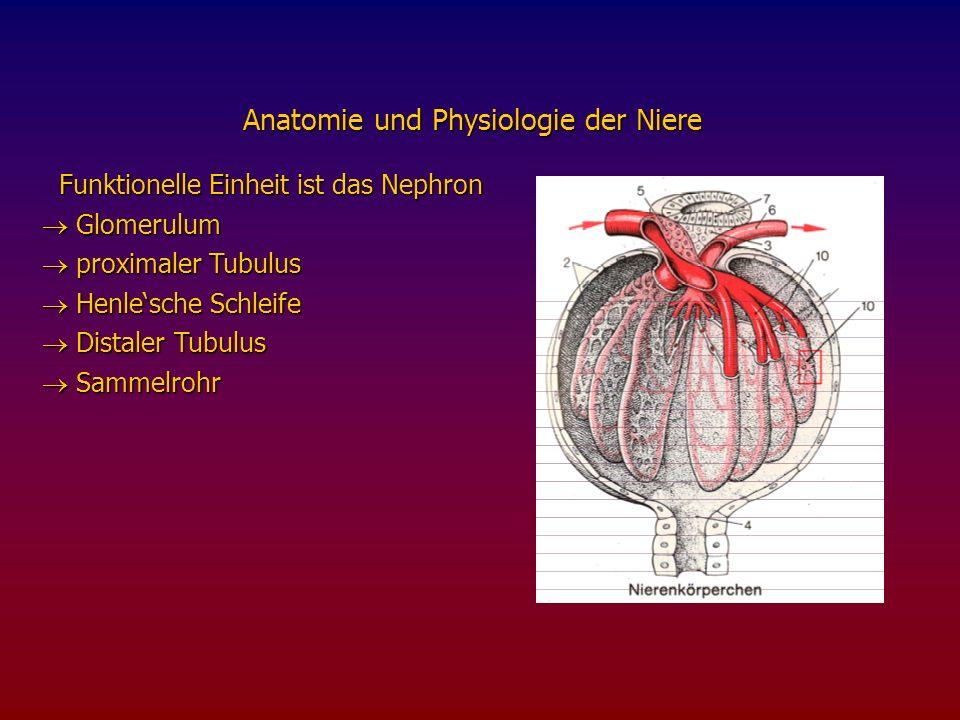 Funktionelle Einheit ist das Nephron Funktionelle Einheit ist das Nephron Glomerulum Glomerulum proximaler Tubulus proximaler Tubulus Henlesche Schleife Henlesche Schleife Distaler Tubulus Distaler Tubulus Sammelrohr Sammelrohr Anatomie und Physiologie der Niere