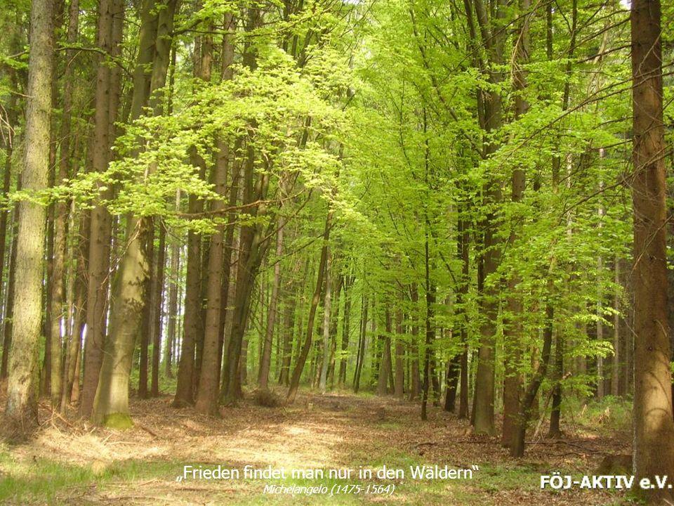 Frieden findet man nur in den Wäldern Michelangelo (1475-1564)