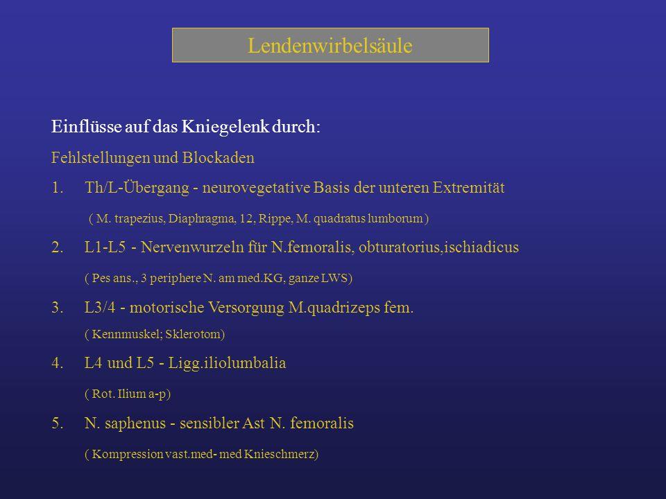 Lendenwirbelsäule Th/lumb. Übergang Plexus Lumbo-sakralis Ligg.iliolumbalia N.saphenus