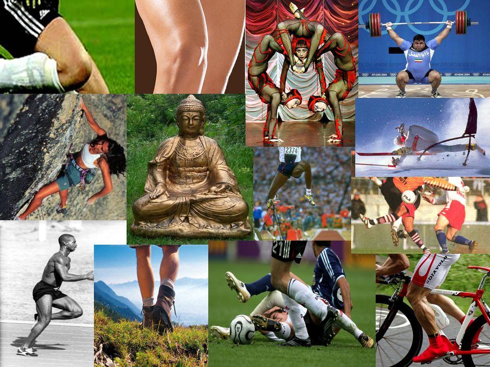 Komplexität des Kniegelenks