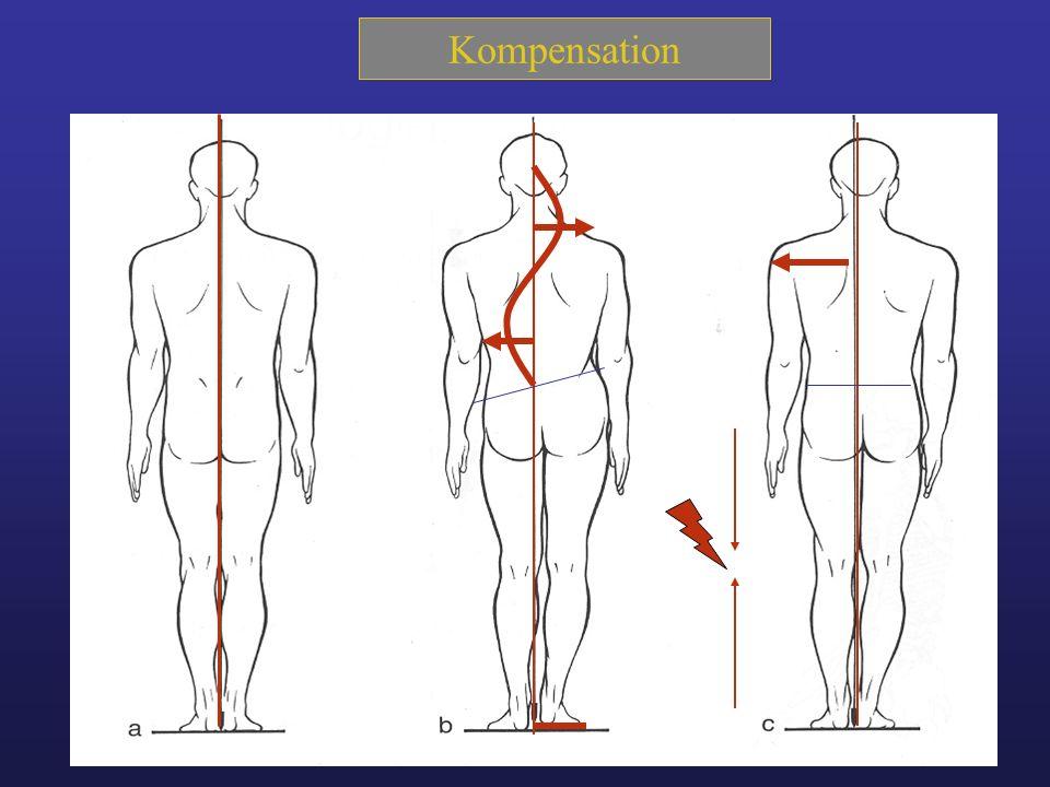 Typologie 123 Haltungstypologie 1.Ventraler Haltungstyp 2.Dorsaler Haltungstyp 3.Normale Haltung
