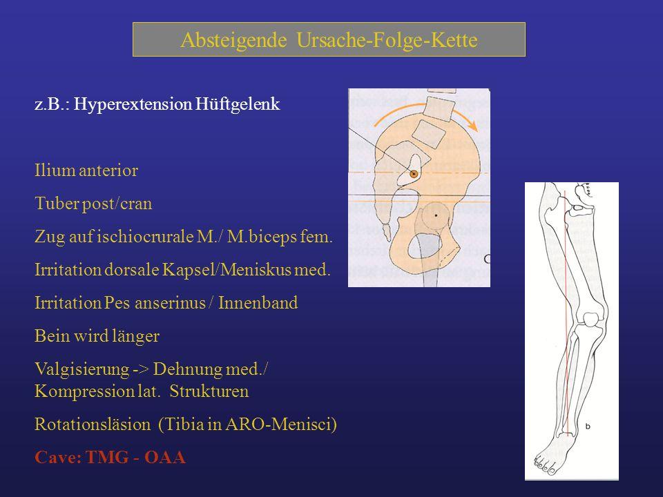 Lendenwirbelsäule Einflüsse auf das Kniegelenk durch: Fehlstellungen und Blockaden 1.Th/L-Übergang - neurovegetative Basis der unteren Extremität ( M.