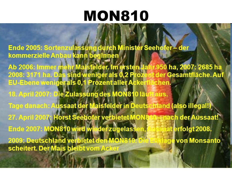 MON810 Eine Pflanze wird durchmogelt! 1996: Erste gv-Pflanzen in EU zugelassen. 1997 dann der MON810. 12.7.2004: Monsanto beantragt erneute Zulassung