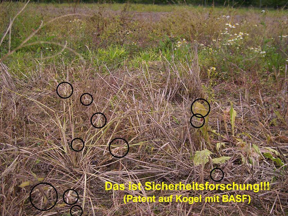Sicherheitsauflagen: Legal, illegal, scheißegal... 3.4.2006: Genehmigung mit Sofortvollzug Der Mäuseschutz...