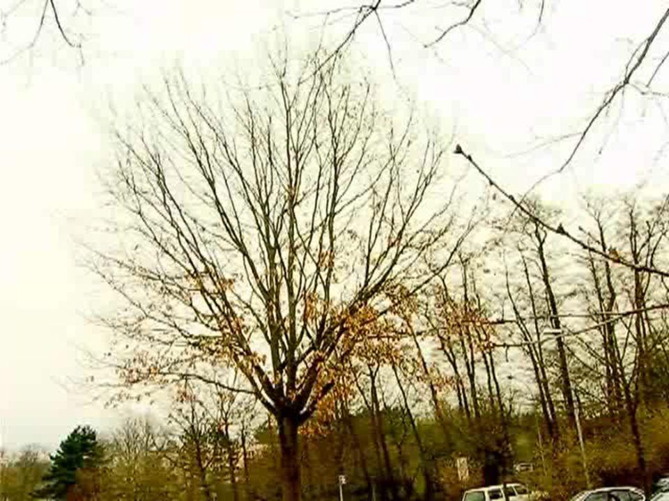 Hoher Zaun, Flutlicht, zwei Kameras, Securities und Hund 26.3.2007: Die Universität teilt in einer Mail an die Überwachungsbehörde den genauen Aussaat