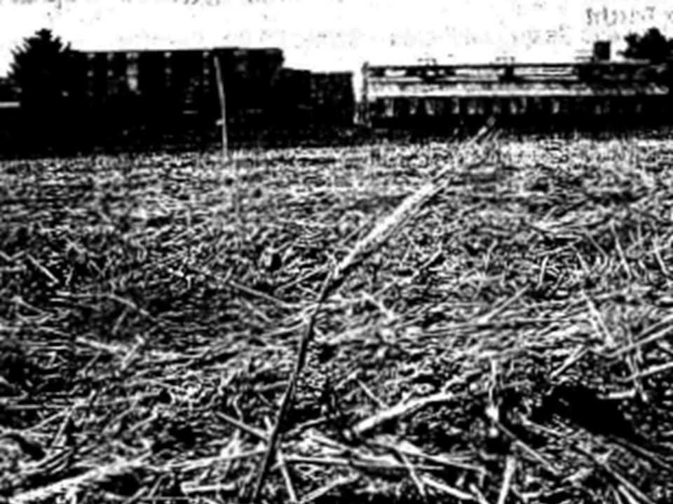 5.7.2006: Der Versuch wird vorzeitig abgebrochen, die Sicherungen entfernt Anders als im Auflagenbescheid werden die unreifen Gerstenpflanzen zerkleinert und die Fläche gefräst.