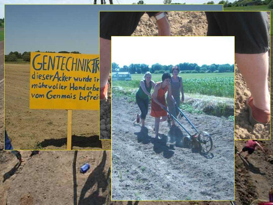 Kartoffeln in Dambeck 2008, die Achte: