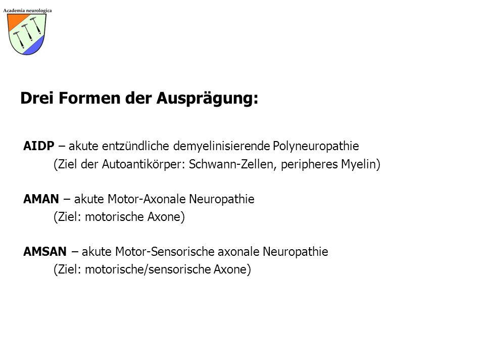 Drei Formen der Ausprägung: AIDP – akute entzündliche demyelinisierende Polyneuropathie (Ziel der Autoantikörper: Schwann-Zellen, peripheres Myelin) A