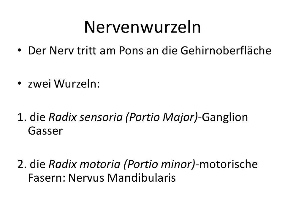 Nervenwurzeln Der Nerv tritt am Pons an die Gehirnoberfläche zwei Wurzeln: 1. die Radix sensoria (Portio Major)-Ganglion Gasser 2. die Radix motoria (
