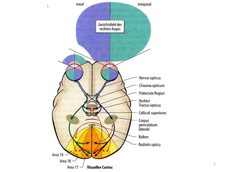 Neuroophthalmologische Störungen Anisokorie Anteriore ischämische Optikusneuropathie Blepharospasmus Trockene Augen Hemispasmus facialis Gesichtsfeldstörungen Microvasculäre Hirnnerven-Lähmung Drusen Migräne Multiple Sklerose Myasthenia Gravis Sehnervgliom Opticusneuritis Hypophysentumoren Pseudotumor cerebri Dysthyerote Orbitopathie 4