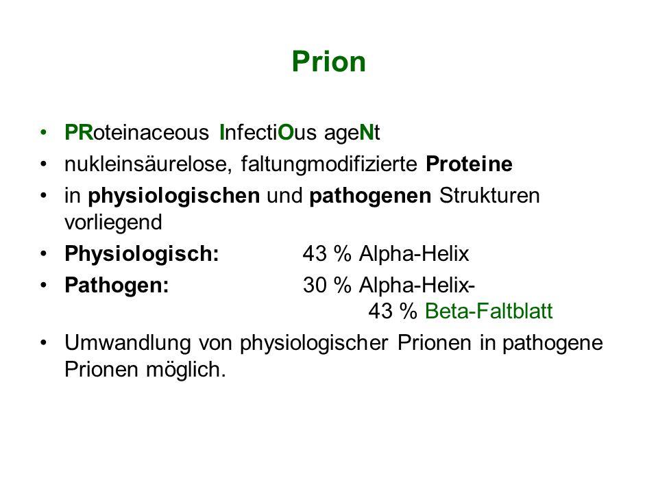 Prion PRoteinaceous InfectiOus ageNt nukleinsäurelose, faltungmodifizierte Proteine in physiologischen und pathogenen Strukturen vorliegend Physiologi