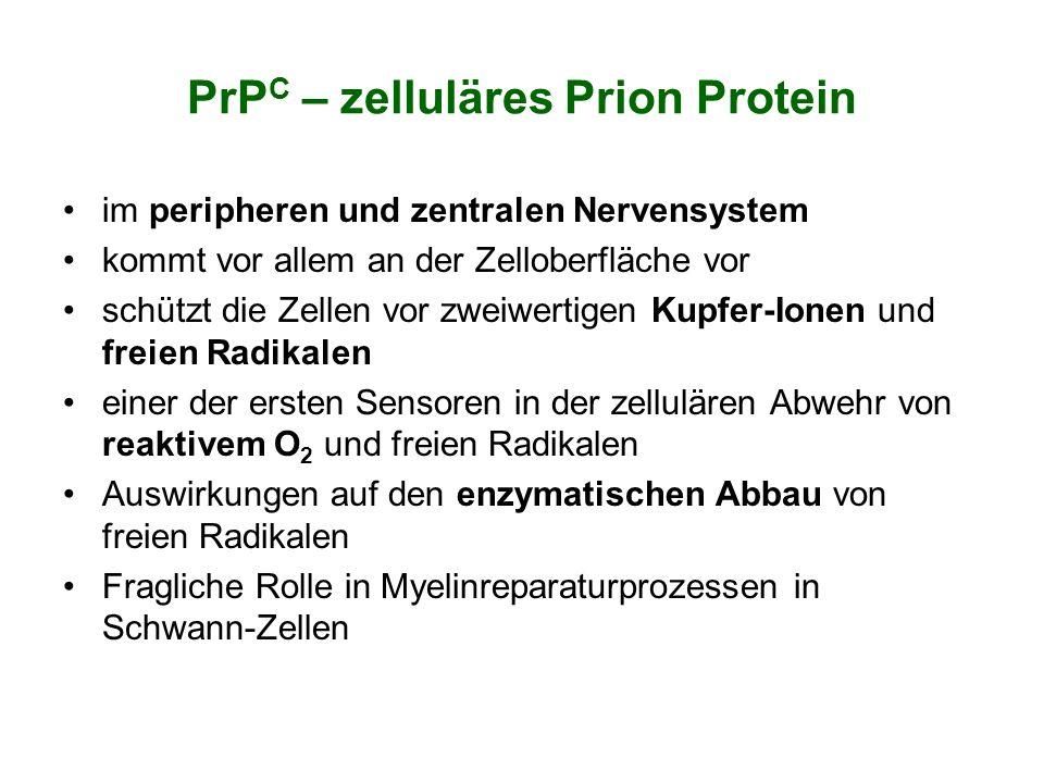 PrP C – zelluläres Prion Protein im peripheren und zentralen Nervensystem kommt vor allem an der Zelloberfläche vor schützt die Zellen vor zweiwertige