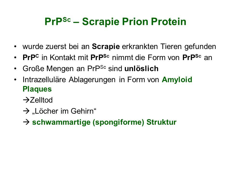 PrP Sc – Scrapie Prion Protein wurde zuerst bei an Scrapie erkrankten Tieren gefunden PrP C in Kontakt mit PrP Sc nimmt die Form von PrP Sc an Große M