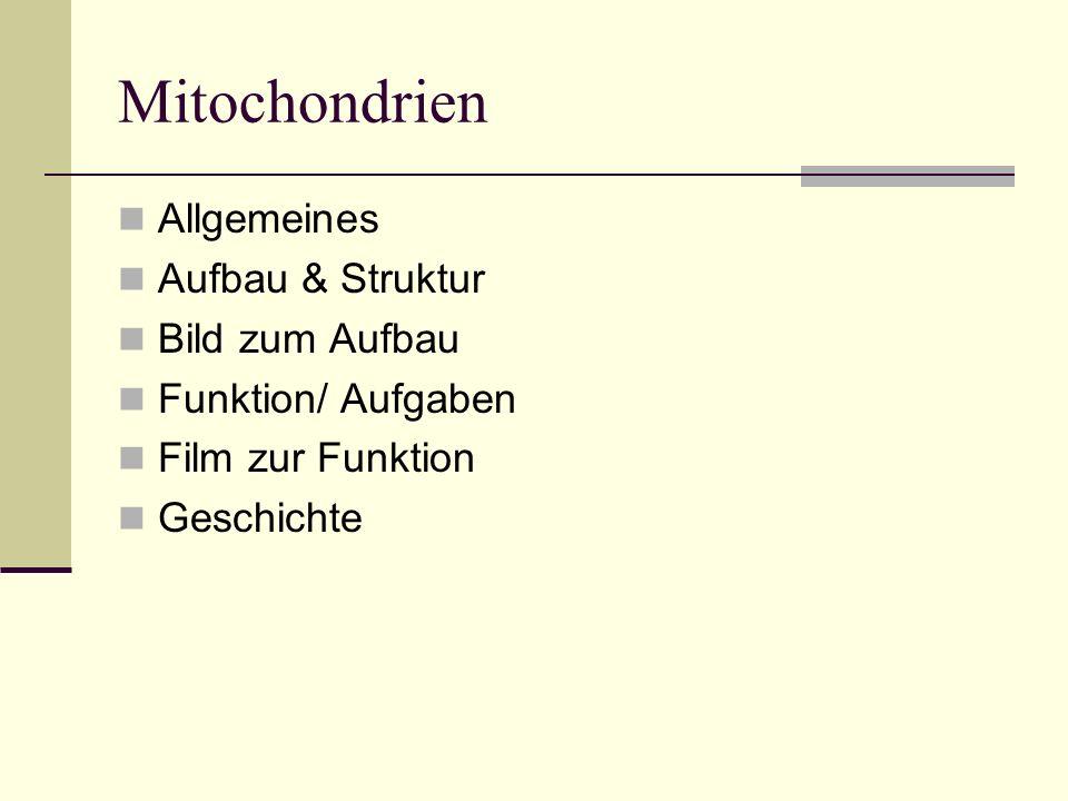 Allgemeines Zellorganellen in Zellen mit hohem Energieverbrauch 0,5-10 Mikrometer lang Anpassung der Anzahl an Energieverbrauch der Zelle Vermehrung durch Zellteilung Vererbung über Eizelle und Spermien Mitochondrien von Spermien werden ausgesondert-> Zellmüll