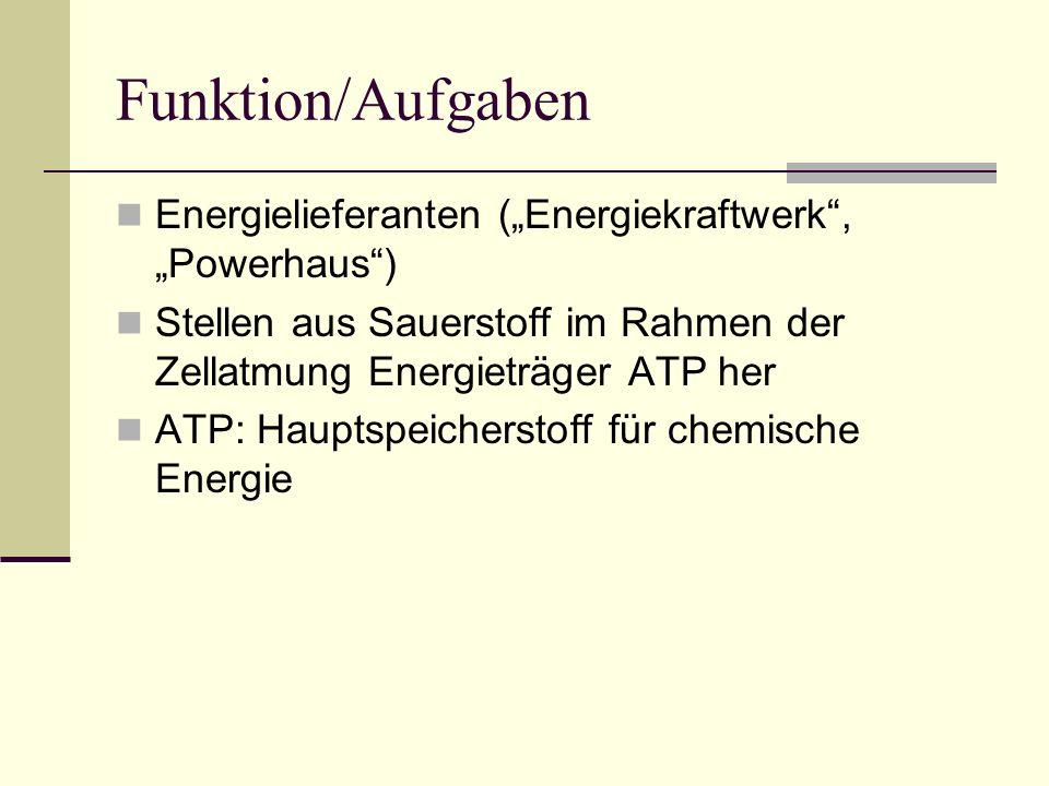 Funktion/Aufgaben Energielieferanten (Energiekraftwerk, Powerhaus) Stellen aus Sauerstoff im Rahmen der Zellatmung Energieträger ATP her ATP: Hauptspe