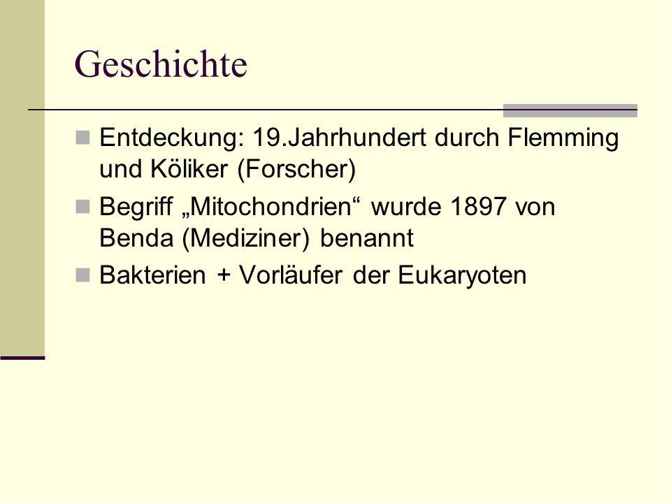 Geschichte Entdeckung: 19.Jahrhundert durch Flemming und Köliker (Forscher) Begriff Mitochondrien wurde 1897 von Benda (Mediziner) benannt Bakterien +